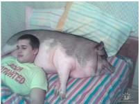 사본 -돼지꿈꾸는법.jpg